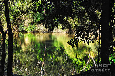 River Through The Trees Print by Kaye Menner