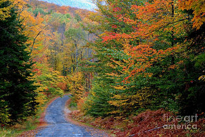 Road Through Autumn Woods Print by Larry Landolfi and Photo Researchers