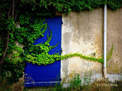 Robust Vine On Blue Door Print by Lainie Wrightson