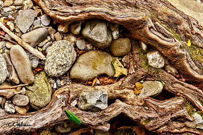 Rocks And Roots Print by Christopher Holmes