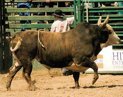 Of Rodeo Bucking Bulls Photograph - Rodeo Bull  by Cheryl Poland