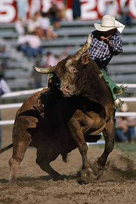 Rodeo Competitor In A Steer Riding Print by Chris Johns