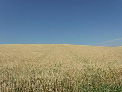 Rolling Wheat Fields Original by Brian  Maloney