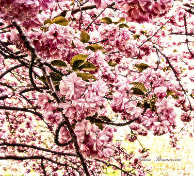 Romantic Cherry Blossoms Print by Georgiana Romanovna