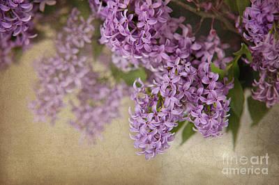 Romantic Lilac Print by Cheryl Davis