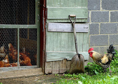 Rooster Photograph - Rooster And Hens by Lisa Phillips