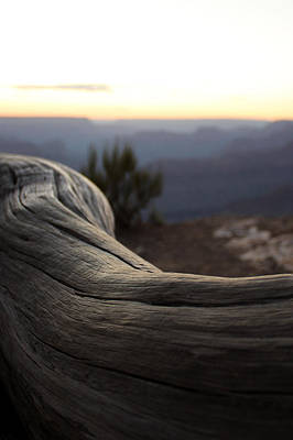 Roots Of The Grand Canyon Original by Cedric Darrigrand