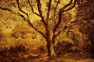 Roots Of Wisdom. Wicklow Hills. Ireland  Print by Jenny Rainbow