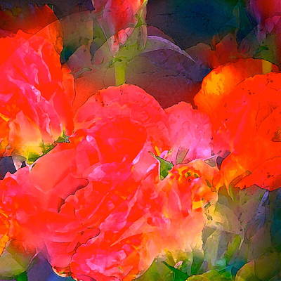 Rose 144 Print by Pamela Cooper