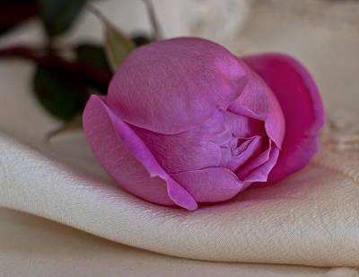 Photograph - Rose And Silk by Ivelina G