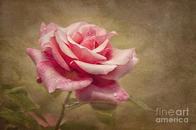Rose Delight Print by Cheryl Davis