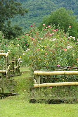 Rose Garden Original by Atiketta Sangasaeng