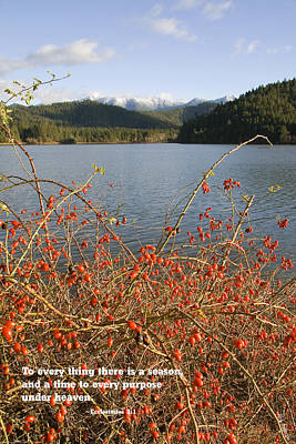 Rose Hips At Lake Selmac In Autumn Print by Mick Anderson