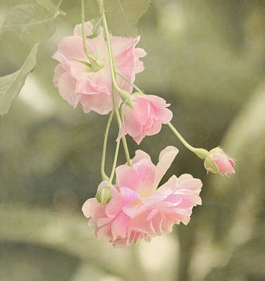 Rose Vine Print by Kim Hojnacki