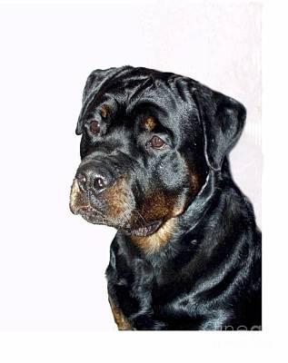 Rottweiler 1539 Print by Larry Matthews