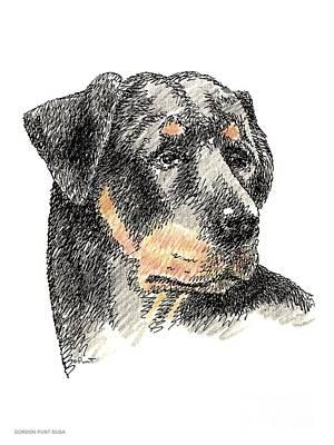 Rottweiler-artwork Print by Gordon Punt