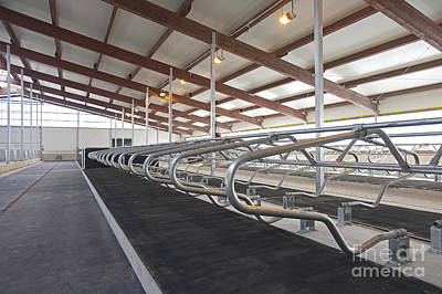 Cubicle Photograph - Row Of Cattle Cubicles by Jaak Nilson