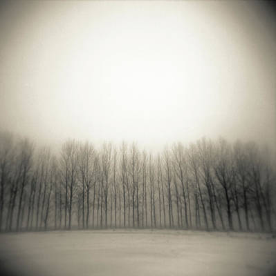 In A Row Photograph - Row Of Trees In Mist by James Arnold