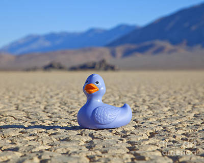 Rubber Duck In Desert Print by David Buffington