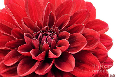 Ruby Red Print by Susan Smith