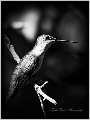 Ruby-throated Hummingbird - Signature Print by Travis Truelove