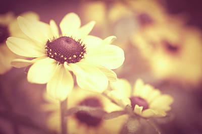 Rudbeckia Flowers Print by Dhmig Photography