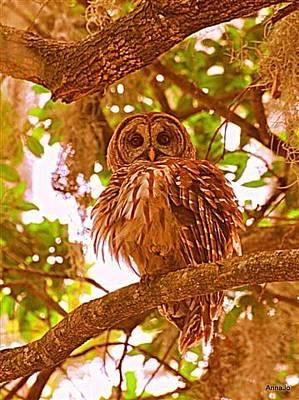 Owl Painting - Ruffled by AnnaJo Vahle