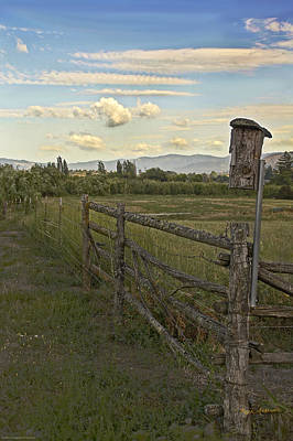 Rural Birdhouse On Fence Print by Mick Anderson
