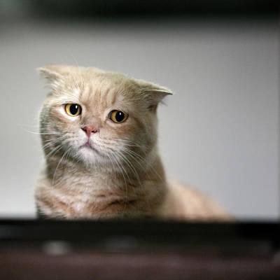 Distraught Photograph - Sad Cat by LeoCH Studio