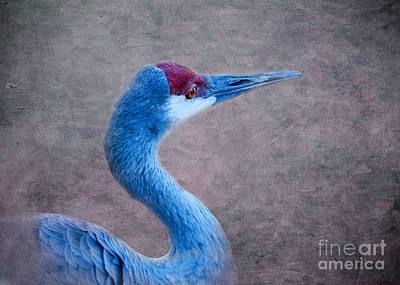 Crane Digital Art - Sandhill Crane 3 by Betty LaRue