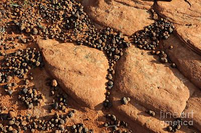 Sandstone And Pebbles Print by Gary Whitton