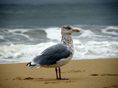 Seagull Photograph - Sandy Hook by Trish Tritz