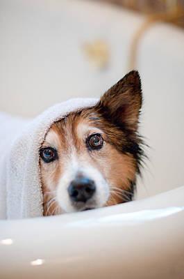 Domestic Bathroom Photograph - Scared Dog Getting Bath by Hillary Kladke
