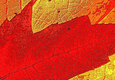 Manipulation Photograph - Scarlet Foliage  by Chris Berry
