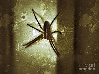 Photograph - Scary Spider by Christy Bruna