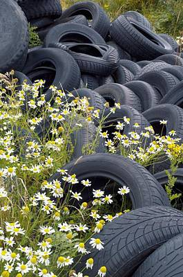 Islay Photograph - Scentless Mayweed Amongst Dumped Tyres by Duncan Shaw