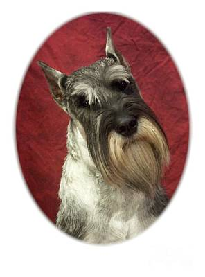 Schnauzer Art Digital Art - Schnauzer 47 by Larry Matthews