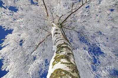 Snowworld Fineart  Print by Tanja Riedel