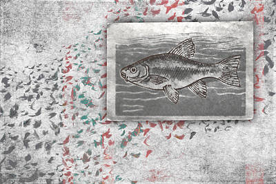 Salmon Photograph - Schools 1 by Carol Leigh