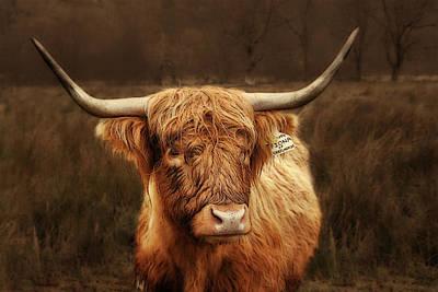 Longhorn Photograph - Scottish Moo Coo - Scottish Highland Cattle by Christine Till