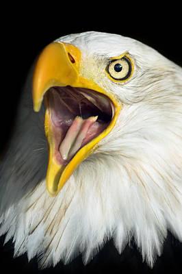Loud Photograph - Screaming Eagle Portrait by Artur Bogacki
