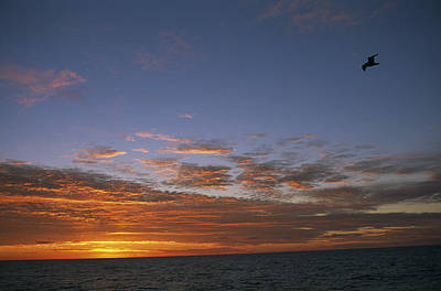Simple Beauty In Colors Photograph - Sea Bird Flies In Front Of Sunset by Gordon Wiltsie