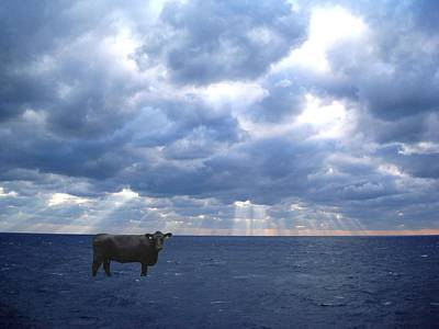 Water Photograph - Sea Cow by Sharon Mick
