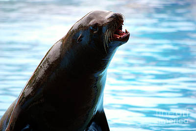 Sea Lion Photograph - Sea-lion by Carlos Caetano