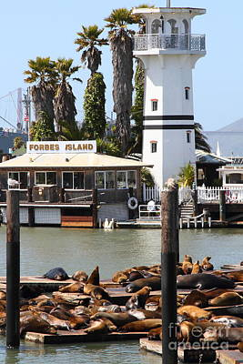 Sea Lions At Pier 39 San Francisco California . 7d14296 Print by Wingsdomain Art and Photography