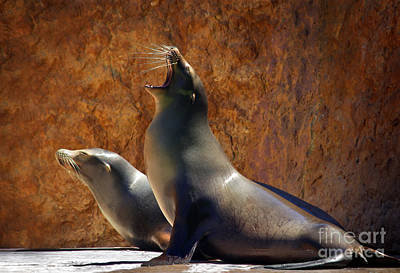 Sea Lions Print by Carlos Caetano