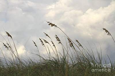 Seagrass Photograph - Sea Oats by Blink Images