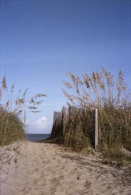 Sea Oats Line The Path Print by Taylor S. Kennedy