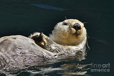 Sea Otter Print by Sean Griffin