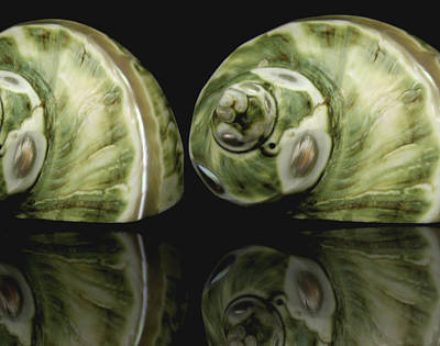 Sea Shells Photography Still Life Print by Ann Powell
